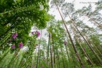 Bos vanuit een ander perspectief