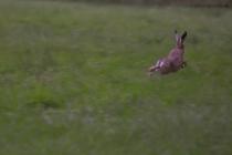 Sprintende Haas
