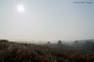 Posbank-Arnhem-mist-veluwe